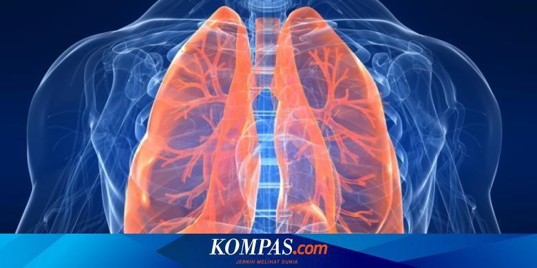 Merokok Dapat Menyebabkan Penyakit Pada Pernapasan Karena Rokok ...