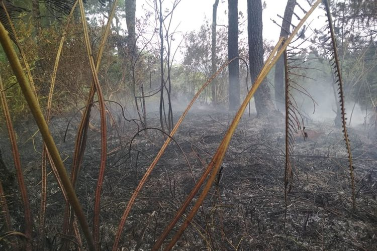 Sebagian kawasan hutan Gunung Slamet yang terbakar du Dukuh Bambangan, Desa Kutabawa, Kecamatan Karangreja, Kabupaten Purbalingga, Jawa Tengah, berhasil dipadamkan.