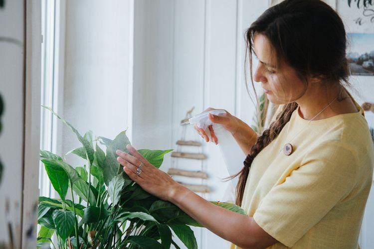 Ilustrasi menyempotkan pupuk cair ke tanaman, memberi pupuk.