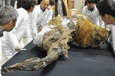 Terobosan Ilmiah, Sel Mammoth Purba Dihidupkan Lagi oleh Para Ilmuwan
