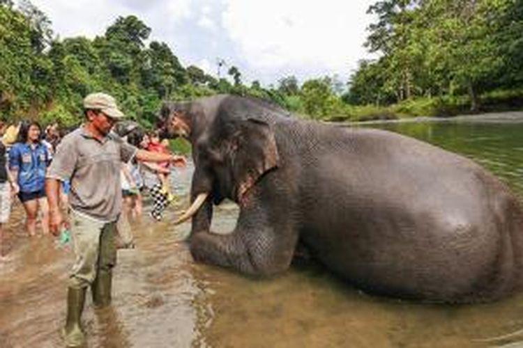 Tangkahan Keindahan Tersembunyi Di Sumatera Utara