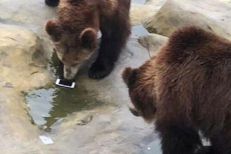 Seorang turis di Taman Satwa Yancheng di Changzhou, provinsi Jiangsu, China, tak sengaja melemparkan iPhone ke kandang beruang pada Kamis (7/2/2019). (Daily Mail)
