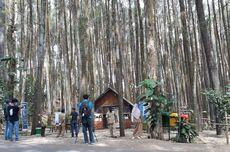 Pinus Sari Mangunan Terapkan Ganjil Genap untuk Wisatawan Mulai 17 September