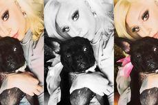 Lady Gaga Segera Melansir Lini Busana Khusus Anjing
