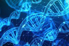 Mengenal DNA, Gen dan Cara Keduanya Memengaruhi Seseorang...