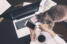 Lakukan 5 Hal Ini agar Badan Tak Stres Saat Kerja di Rumah