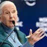 Saat Lockdown, Pakar Konservasi Terkemuka Jane Goodall Berseru: Stop Perdagangan Hewan Liar