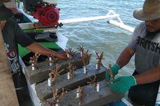 Pasca-tsunami, Nelayan Benahi Pesisir Pantai dengan Transplantasi Ratusan Terumbu Karang