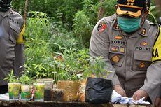 Polisi Temukan Ladang Ganja Seluas Satu Hektar di Lembang