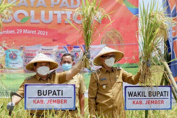 Bupati Jember Hendy Siswanto dan Wabup Jember M. Balya Firjaun Barlaman memanen padi di areal lahan pertanian di Desa Dukuh Dempok, Kecamatan Wuluhan, Kabupaten Jember, Senin (29/3/2021).