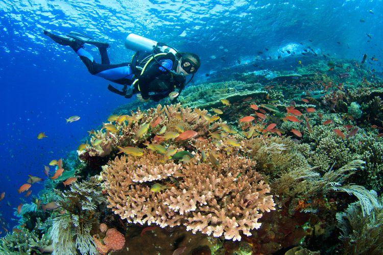 Ilustrasi diving di Nusa Duawaj, Taman Nasional Komodo.