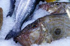 Apa Itu Ikan Dori? Bentuknya Aneh tapi Cocok Dimasak Beragam Hidangan