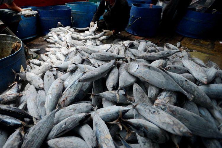 Bongkar Hasil Tangkapan - Pekerja membongkar ikan cakalang hasil tangkapan sebuah kapal penangkap ikan samudera di Pelabuhan Perikanan Samudera Nizam Zachman, Muara Baru, Jakarta.