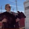 Ketika Joaquin Phoenix Selamatkan Induk dan Anak Sapi dari Rumah Jagal