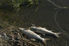 Diwarnai Aksi Kejar-kejaran, KKP Tangkap 4 Pelaku Pengeboman Ikan di Selayar