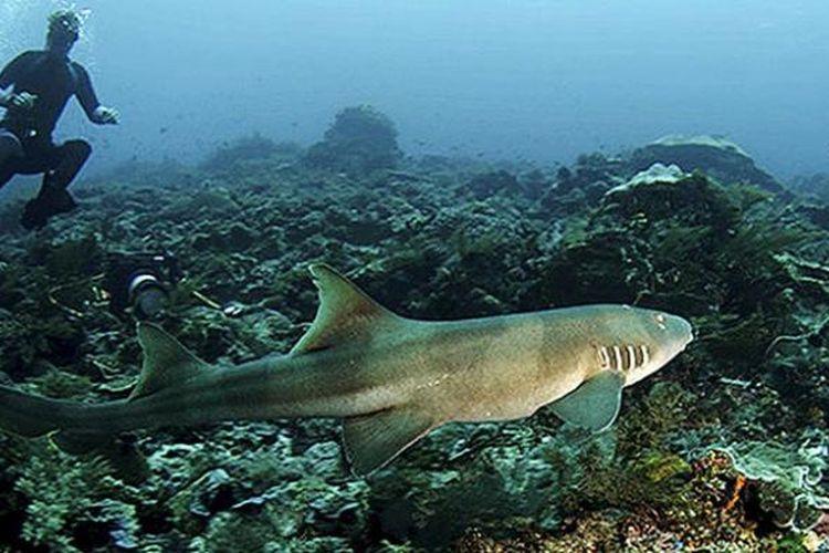 Taman Laut Selat Pantar Alor, Nusa Tenggara Timur, memiliki keunikan sendiri. Berbagai jenis karang dan tumbuhan laut ditemukan di tempat tersebut dengan berbagai ragam warna. Pada sore dan pagi hari, ratusan lumba-lumba menari di permukaan air laut di sekitar pulau-pulau kecil yang mengelilingi selat itu. Foto diambil pada Kamis (27/10/2016).