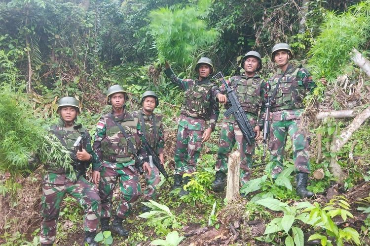 Personel TNI saat mencabut pohon ganja yang berhasil ditemukan saat melakukan patroli di perbatasan RI - PNG, Senin (10/6/2019)