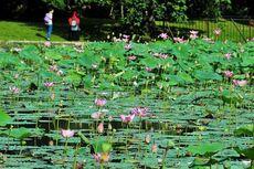 4 Tempat Wisata di Bogor yang Bisa Dikunjungi dalam Satu Hari