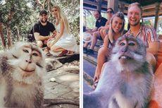 Bikin Foto Liburan Monyet Selfie di Monkey Forest Ubud, Begini Caranya