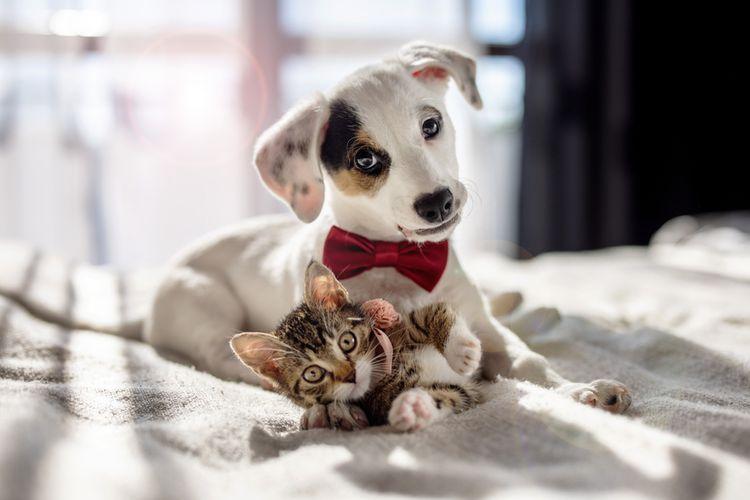 Ilustrasi anjing dan kucing di rumah.
