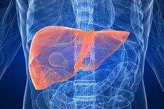 Hati-hati Konsumsi Minuman Herbal Pembersih Liver