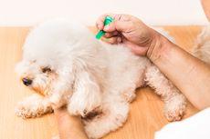 Cara Membersihkan Telinga Anjing Menurut Dokter Hewan
