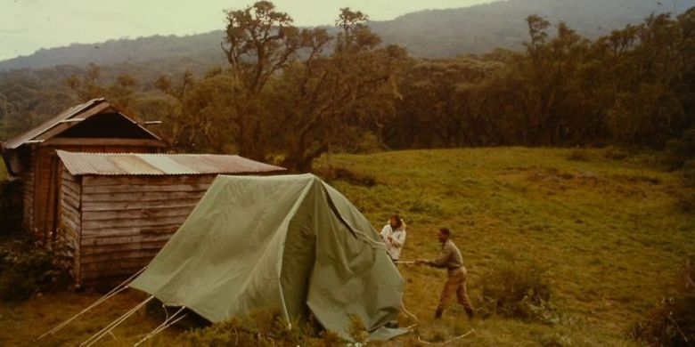 Dian Fossey mendirikan perkemahan. (Dian Fossey Gorilla Fund International/gorillafund.org)
