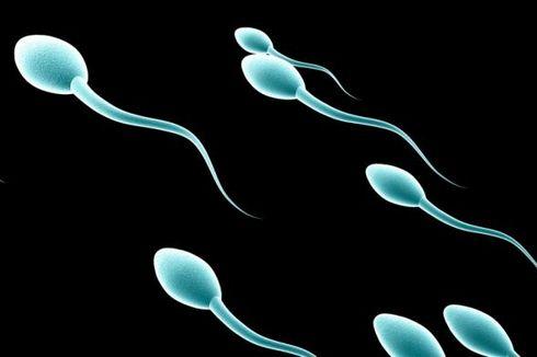 Bagaimana Cara Sperma Berenang Menuju Sel Telur?