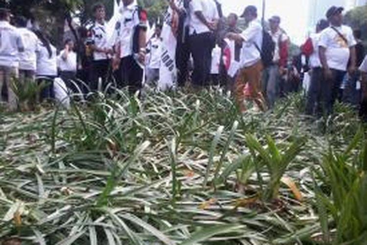 Rumput dan tanaman di sepanjang Jalan Imam Bonjol, mulai Bundaran Taman Suropati hingga di depan kantor KPU, Menteng, Jakarta Pusat, Selasa (20/5/20114) siang, rusak.