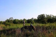 Taman Nasional Way Kambas Belum Berencana Buka Akses Wisata