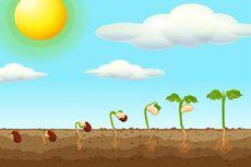Gerak Tropisme pada Tumbuhan