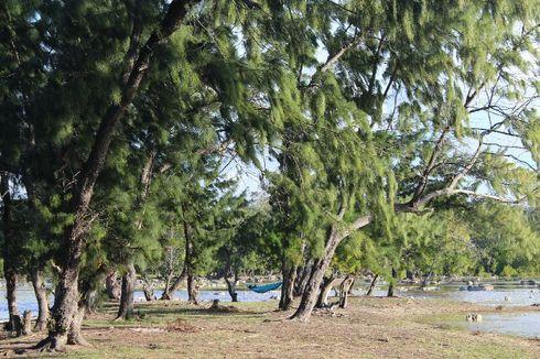 Hutan Cemara Laipori Sumba, Wisata ala Film Pendekar Tongkat Emas