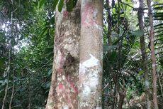 Hutan Desa Rimbo Pusako Terancam