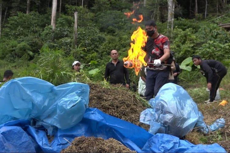 Aparat dari Polres Jakarta Barat memusnahkan ganja yang ditemukan di Mandailing Utara pada Jumat (5/3/2021)