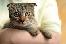 Baru Pertama Kali Memelihara Kucing? Simak, Ini Panduannya