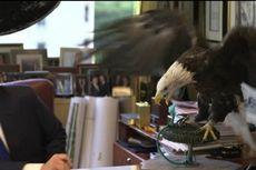 Donald Trump Hampir Dipatuk Elang Botak saat Sesi Pemotretan