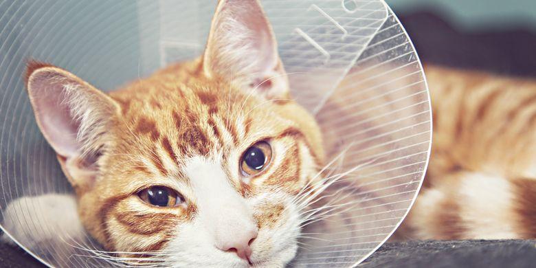5 Cara Merawat Kucing Diare Tak Perlu Langsung Ke Dokter Hewan Halaman All Kompas Com