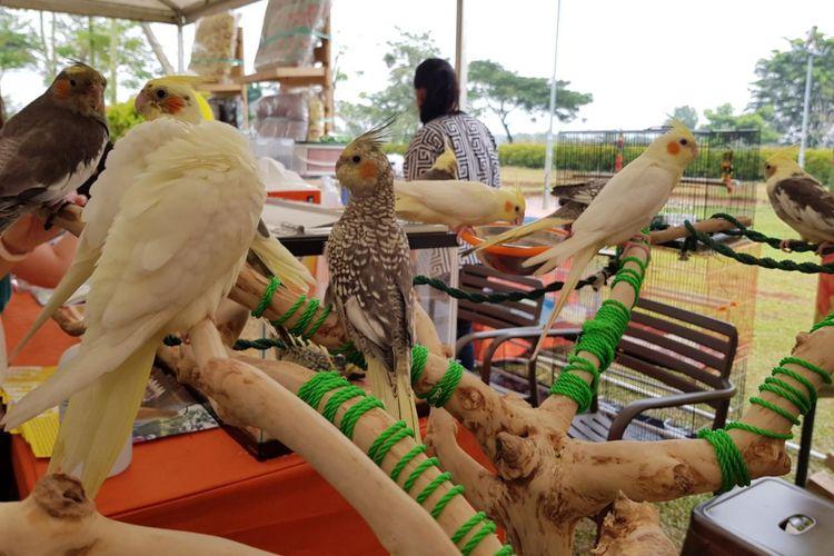 26+ Cerita tentang hewan peliharaan burung terupdate