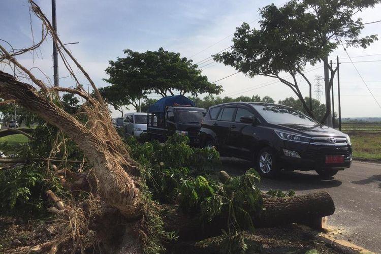 Puluhan pohon tumbang di akses jalan jembatan Suramadu Bangkalan yang menyebabkan kendaraan macet total, Sabtu (21/11/2020).