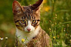 Simak, Ini Bahasa Telinga Kucing yang Patut Diketahui