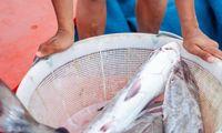 4 Cara Olah Ikan Segar Sebelum Dimasak, Bisa Simpan di Freezer Dulu