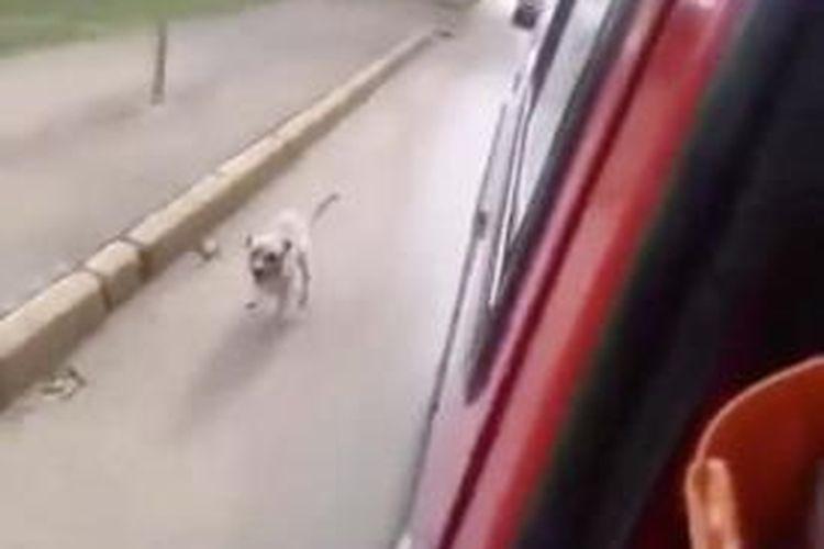 Seorang paramedis sebuah rumah sakit di Goiana, Brasil merekam aksi anjing milik seorang tunawisma yang mengejar ambulans yang mengangkut majikannya ke rumah sakit.