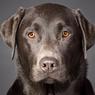 5 Alasan Mengapa Kamu Harus Adopsi Anjing Hitam