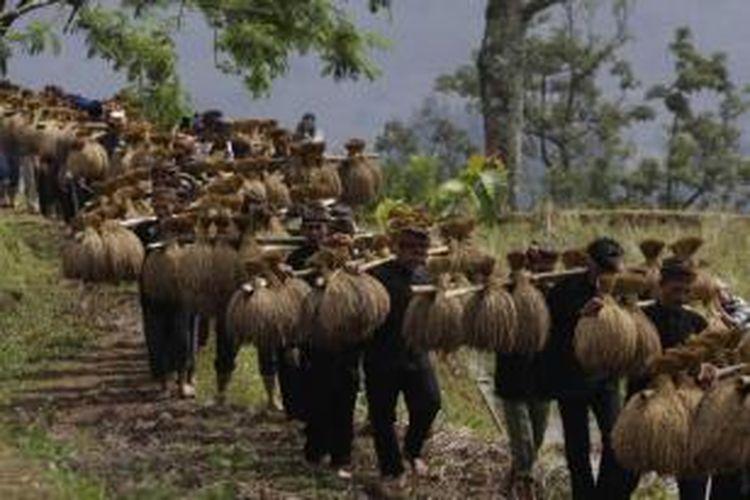 Warga adat Kasepuhan Ciptagelar, Kabupaten Sukabumi, Jawa Barat, memanggul padi saat upacara seren taun, Minggu (24/8/2014). Seren taun adalah upacara adat untuk mensyukuri hasil panen padi selama satu tahun.