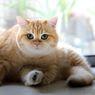 Jadwal Memotong Kuku Kucing Menurut Dokter Hewan