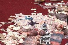 Parlemen Taiwan Disiram Jeroan Babi dalam Protes Pelonggaran Impor