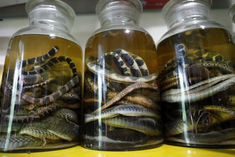 Ular mati diawetkan di dalam botol di peternakan ular desa Zisiqiao China pada 15 Juni 2011. Desa tersebut juga dikenal dengan nama Snake Town. Desa tersebut mampu membiakkan 3 juta ular dalam setahun yang digunakan untuk konsumsi makanan dan obat tradisional. REUTERS/Aly Song