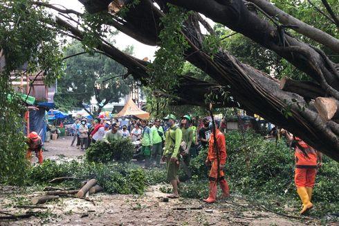 Petugas Suku Dinas Kehutanan Evakuasi Pohon Beringin Tumbang di Pasar Pondok Labu