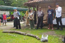 Gali Parit di Ladang Jagung, Warga Sragen Temukan Fosil Gading Gajah Purba Sepanjang 4 Meter