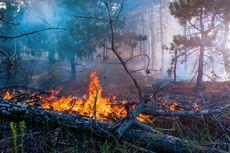 Sejak Selasa Malam, Kebakaran Lahan Gambut di Sumsel Sulit Dipadamkan